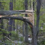 Félmilliárdos kár a borsodi állami erdőkben