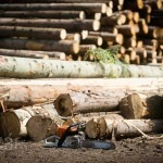 Drasztikusan emelkedett a faanyag ára, rönkfa-exportőrből importőrré vált Románia