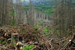 Szúinvázió és a faanyagok romlása Európában